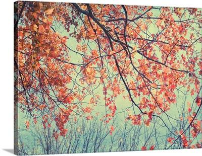 Autumn Tapestry II