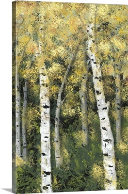 Birch Treeline III