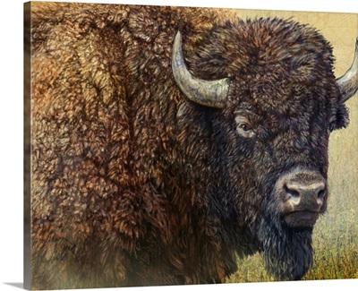 Bison Portrait I