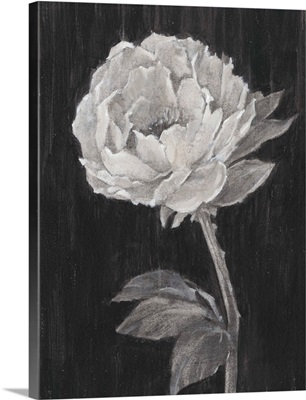Black and White Flowers II