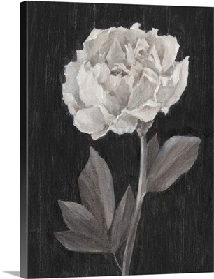 Black and White Flowers IV