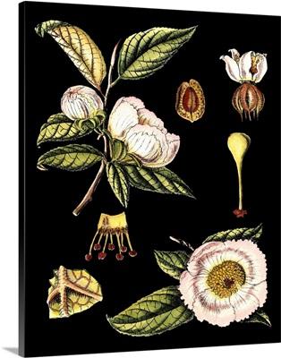 Black Background Floral Studies III