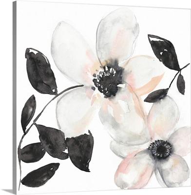 Black & Blush Anemone I