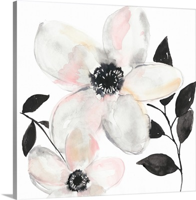 Black & Blush Anemone II
