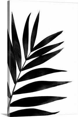 Black Palm I