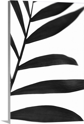 Black Palms V