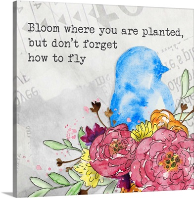 Bloom and Fly II