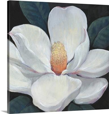 Blooming Magnolia I