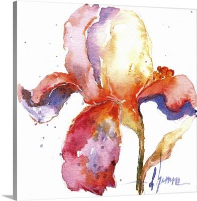 Blooms Hermanas II