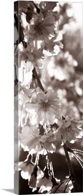 Blossom Triptych II