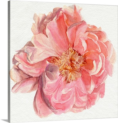 Blossomed Peony I
