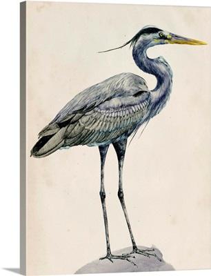Blue Heron Rendering I