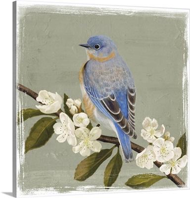 Bluebird Branch II