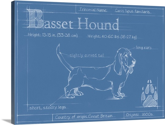 Blueprint basset hound wall art canvas prints framed prints wall blueprint basset hound malvernweather Image collections