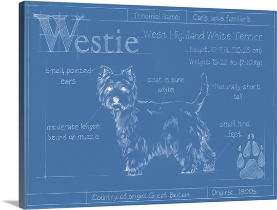 Blueprint westie wall art canvas prints framed prints wall peels blueprint westie malvernweather Image collections