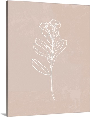 Blush Bloom I