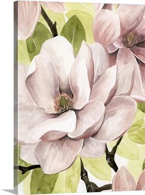 Blush Magnolia II