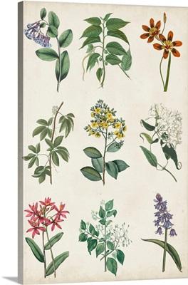 Botanical Chart I