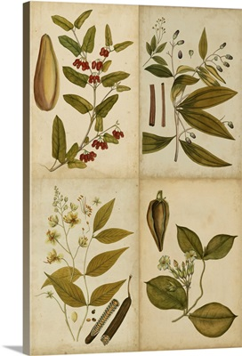 Botanical Montage I