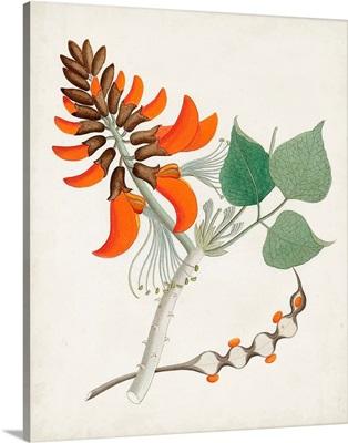 Botanical of the Tropics I