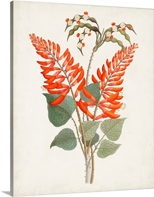 Botanical of the Tropics II