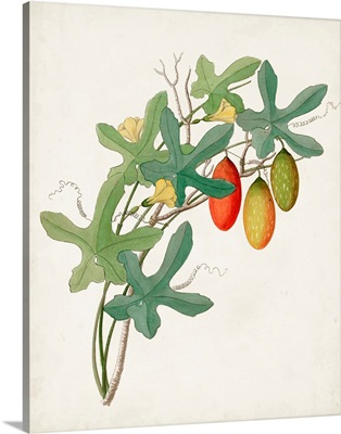 Botanical of the Tropics III