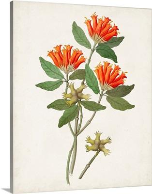 Botanical of the Tropics V