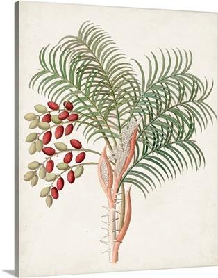 Botanical of the Tropics VII