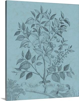 Botanical on Teal V