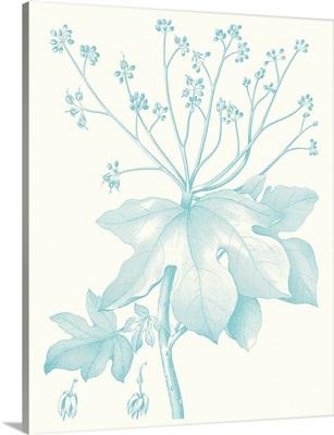 Botanical Study in Spa I