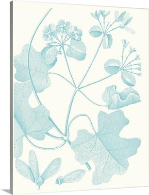 Botanical Study in Spa II
