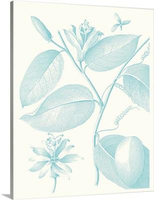 Botanical Study in Spa III