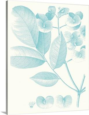Botanical Study in Spa V