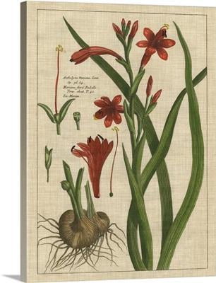 Botanical Study on Linen II
