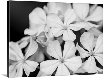 Botanical Under Cold Moonlight I
