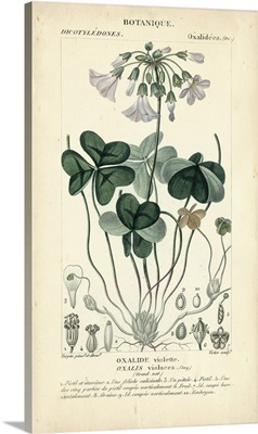 Botanique Study in Lavender I