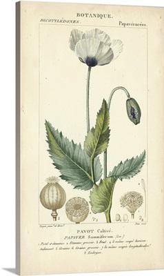 Botanique Study in Lavender II