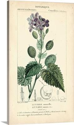 Botanique Study in Lavender III