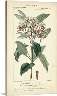Botanique Study in Pink II