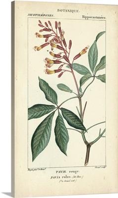 Botanique Study in Pink III