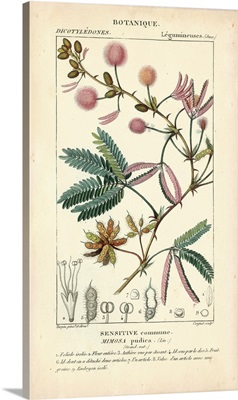 Botanique Study in Pink IV