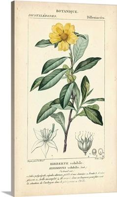 Botanique Study in Yellow I