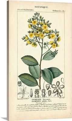 Botanique Study in Yellow II