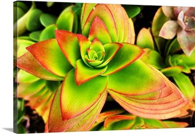 Bright Exotic II