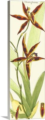 Brilliant Orchids I