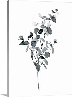 Brume Botanical IV
