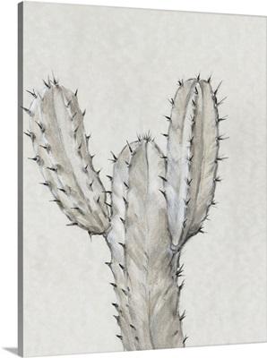 Cactus Study II