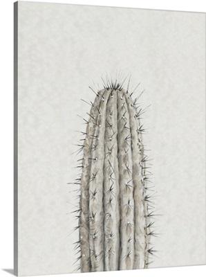 Cactus Study III