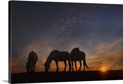 Camargue Sunrise