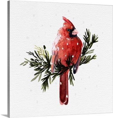Cardinal With Snow I
